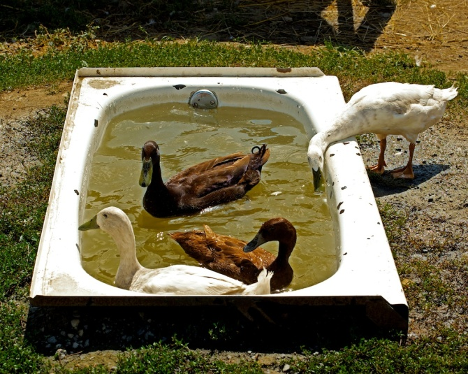 Bird Bath in Chantilly, VA