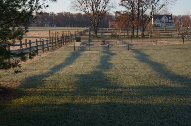 Early morning and evening light can create long shadows like these