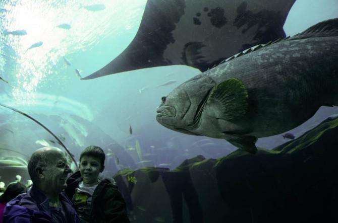 A little fun under the sea!