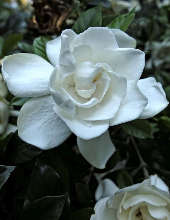 Babcha's Flower