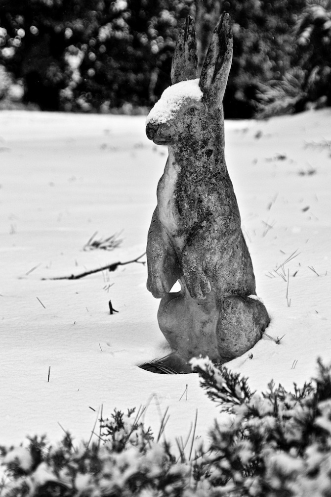 Cold Rabbit