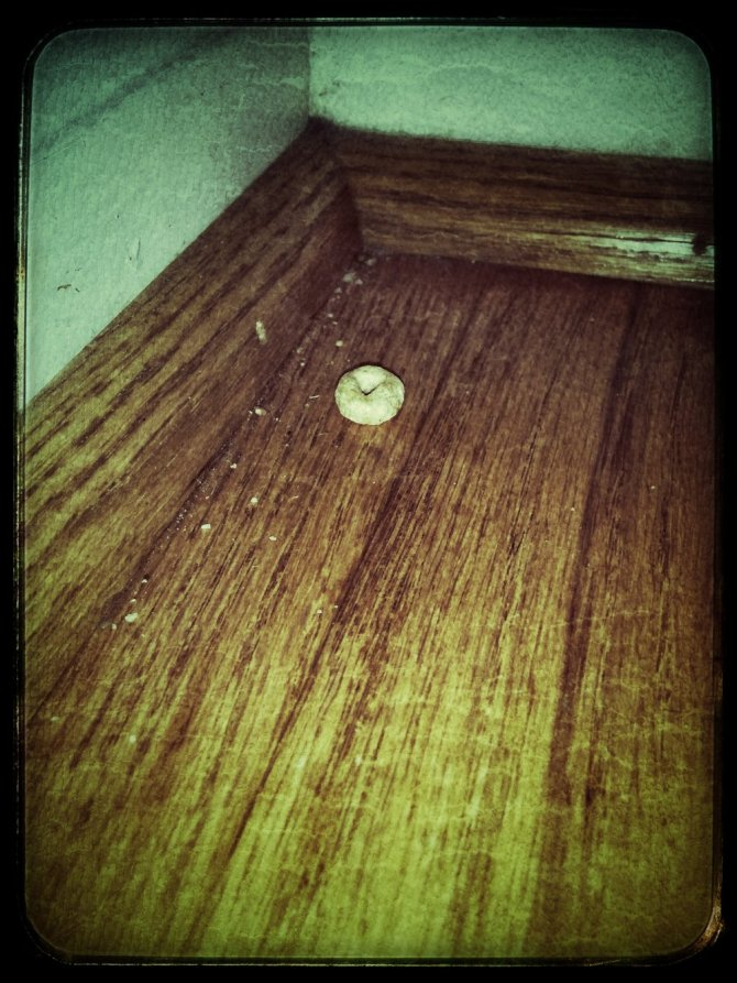 The Lonely Cheerio which should bug the devil out of me.